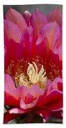 Deep Pink Cactus Flower Beach Towel
