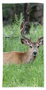 Deer At Rest Beach Towel