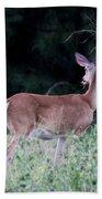 Deer - Doe - I Heard Something Beach Towel