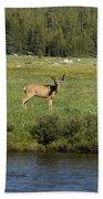 Deer In Tuolumne Meadow Beach Towel