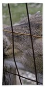Deer Will Work For Crackers Beach Towel