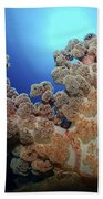 Dendronephthya Soft Coral, Acasta Reef Beach Towel