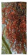 Desert Mistletoe Berries Beach Towel