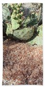 Desert's Collection Of Dried Flowers1 Beach Towel