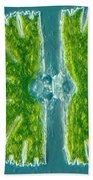 Desmid Algae Beach Towel