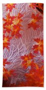 Detailed View Of Soft Coral Revealing Beach Towel