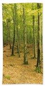 Devils Glen Woods, County Wicklow Beach Towel