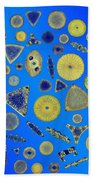 Diatom Arrangement Beach Towel