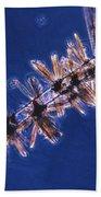 Diatoms Attached To Alga, Lm Beach Towel