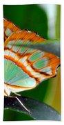 Dido Longwing Butterfly Beach Towel
