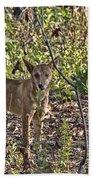 Dingo In The Wild V3 Beach Towel