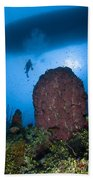 Diver And Barrel Sponge, Belize Beach Towel
