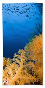 Diver Hovering Over Soft Coral Reef Beach Towel