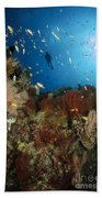 Diver Over Reef Seascape, Indonesia Beach Towel