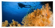 Diver Swimms Above Soft Coral, Fiji Beach Towel