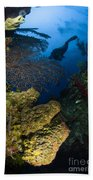 Diver Swims Over A Reef, Belize Beach Towel