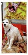 Dog At Carnival Beach Towel