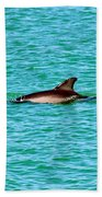 Dolphin Swimming Beach Towel