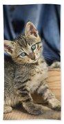 Domestic Cat Felis Catus Kitten, Germany Beach Towel