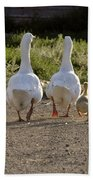 Domestic Geese With Goslings Beach Towel