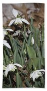 Double Snowdrops Squared Beach Towel