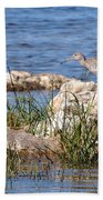 Dowitcher Beach Towel