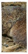 Down Right Dirty Mole Beach Towel