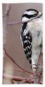 Downy Woodpecker 1 Beach Towel