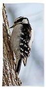 Downy Woodpecker 4 Beach Towel