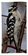 Downy Woodpecker 7 Beach Towel