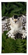 Downy Woodpecker In Flight Beach Towel