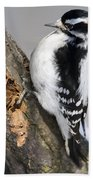 Downy Woodpecker Perched In A Tree Beach Towel