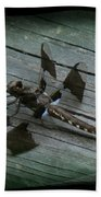 Common Whitetail Dragonfly Beach Towel