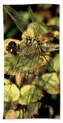 Dragonfly Wingspan Beach Towel