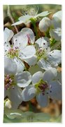 Dreams Of Pear Blossoms Beach Towel