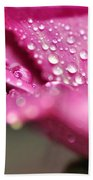 Droplet On Rose Petal Beach Towel