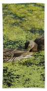 Duck Dinner Beach Towel