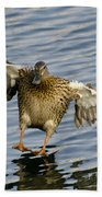 Duck Landing Beach Towel