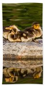 Ducklings Catch Some Rays Beach Towel