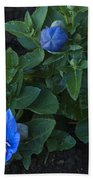 Dwarf Balloon Flower Platycodon Astra Blue 2 Beach Towel