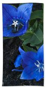 Dwarf Balloon Flower Platycodon Astra Blue  Beach Towel by Steve Purnell