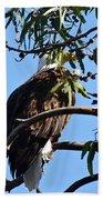 Eagle Under Cover Beach Towel