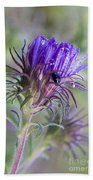 Early Knapweed Beach Towel