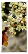 Eastern Amberwing On Wild Buckwheat Beach Towel