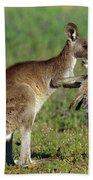 Eastern Grey Kangaroo Macropus Beach Towel