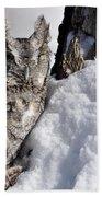 Eastern Screech Owl Beach Towel