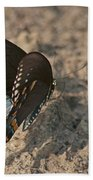 Eastern Tiger Swallowtail 8526 3205 Beach Towel