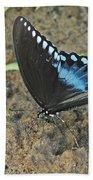 Eastern Tiger Swallowtail 8537 3215 Beach Towel