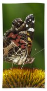 Echinacea Butterfly Meal Beach Towel