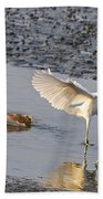 Egret Being Chased By Alligator Beach Towel